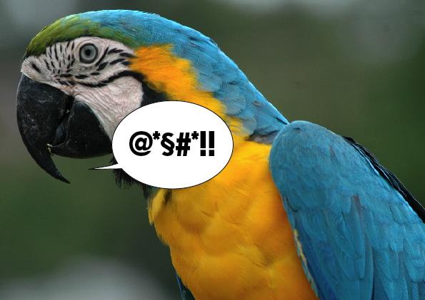 Parolacce bestiali: pappagalli truzzi e scimmie fallocratiche