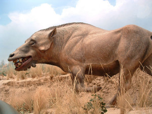 dog-headed-pig-monster-namibia