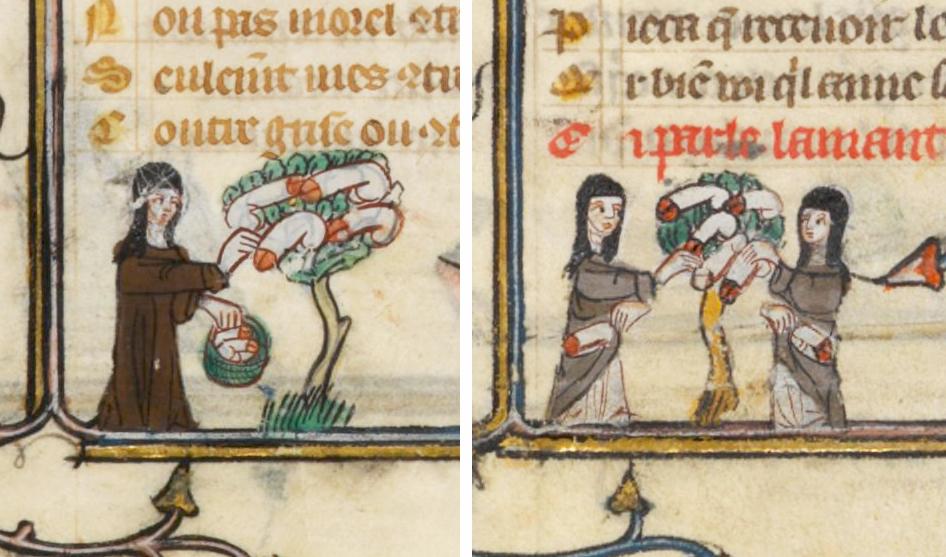"""Albero dei peni nel """"Roman de la rose"""", manoscritto francese del 1300."""