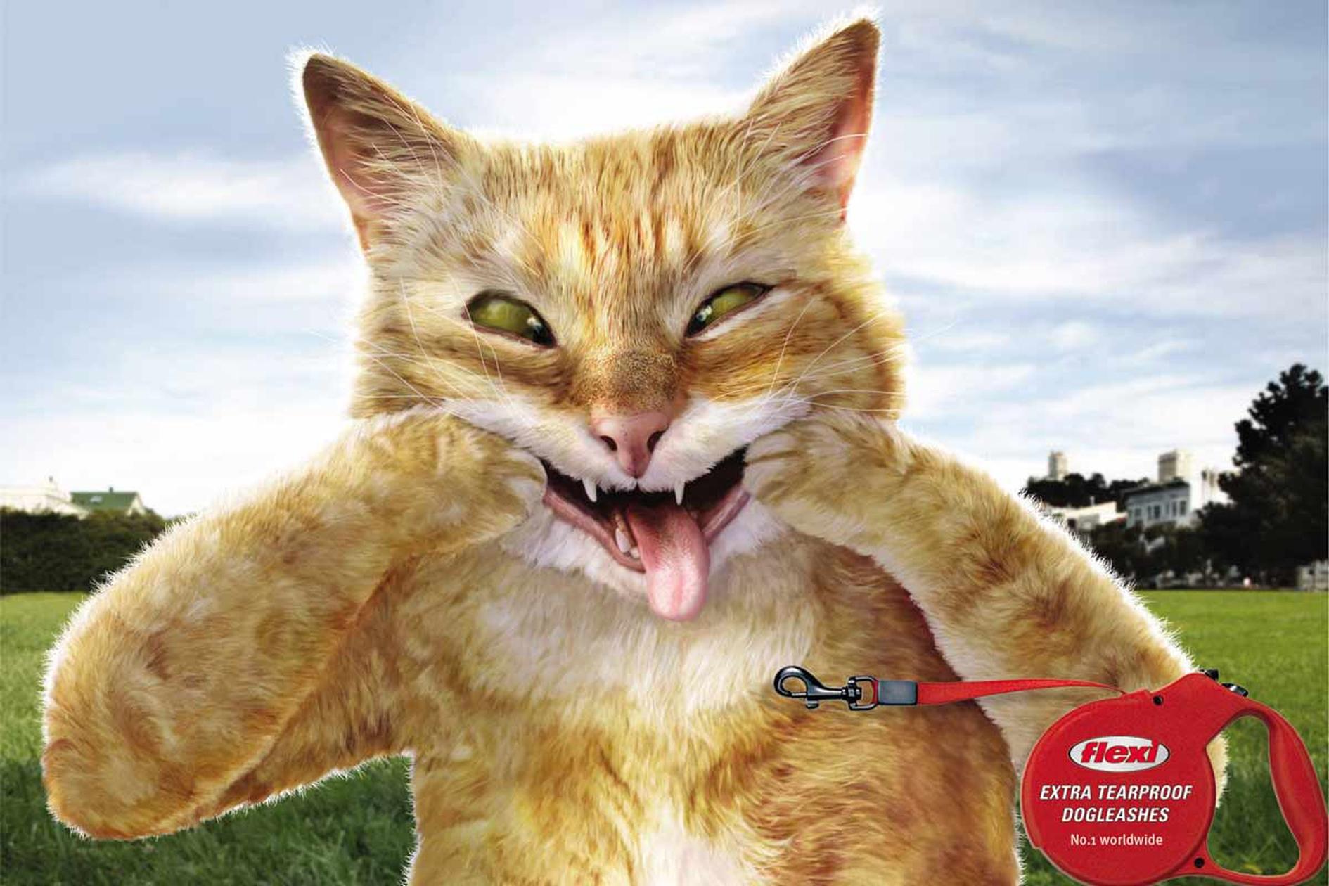anuncio-de-gato